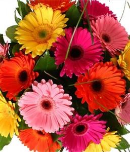 bouquet-di-gerbere-gialle_b